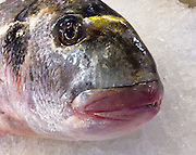 """The gilt-head (sea) bream (Sparus aurata), or orata, is found in the Mediterranean Sea and eastern North Atlantic Ocean. The photo was taken at Rialto Pescheria, or fish market, in Venice, Italy. In Italy, the fish is called """"orata"""" (meaning golden). In Croatia it is """"ovrata"""", """"orada"""", """"lovrata"""" or """"komar?a"""". ?n Turkey the fish is referred to as """"çipura"""" or """"çupra"""". In Greece and Cyprus it's """"tsipoúra"""" (????????). In Malta it is called """"awrata"""". In Albania is is called """"koce"""". In Israel it is known as """"Chipura"""" or """"Denisse"""".  Venice, the romantic """"City of Canals"""" stretches across 117 small islands in the marshy Venetian Lagoon along the Adriatic Sea in northeast Italy, Europe. The Republic of Venice wielded major sea power during the Middle Ages, Crusades, and Renaissance."""