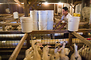 A worker pushes a cart down the aisle between the duck pens carrying buckets of grain used for force-feeding the birds at Hudson Valley Foie Gras in Ferndale, New York on October 11, 2008. Migratory birds, including ducks, are capable of storing large amounts of fat in their liver. Forced overeating replicates the effect, producing the enlarged, fatty livers used for Foie Gras.