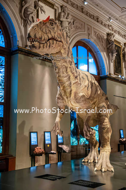 Mechanical model of a Allosaurus fragilis.  Allosaurs were large carnivorous reptiles that lived during the late Jurassic period (155 to 145 million years ago). They were bipedal (two-legged) predators that averaged a height of 8.5 metres. Photographed at the Natural History Museum, Vienna, Austria