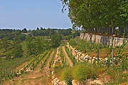 The unusual terraced vineyard Chateau de Pressac St Etienne de Lisse Saint Emilion Bordeaux Gironde Aquitaine France