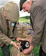 Wearing traditional tweed jacket and flat cap, a judge examines a Swaledale Lamb at Danby Show, North York Moors National Park, North Yorkshire, UK.