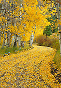Winding Road with Fall Color, Inyo National Forest, Mono County, California