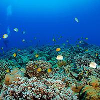 Marine Life, Reef's End, Molokini Crater, Maui Hawaii