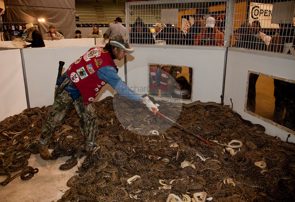 SWEETWATER, TX - MARCH 14: A Jaycees volunteer snake handler works in the pit of western diamondback rattlesnakes brought in by hunters during the 51st Annual Sweetwater Texas Rattlesnake Round-Up, March 14, 2009 in Sweetwater, Texas. Approximately 24,000 pounds of rattlesnakes will be collected, milked for venom and the meat served to support charity. (Photo by Richard Ellis)