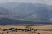 Wilderbeest in the  Nechisar National Park, Ethiopia,Africa
