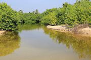 Mangrove river creek at Pasikudah Bay, Eastern Province, Sri Lanka, Asia