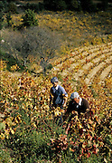 vinmarker, Sardinia.dias Sardinia, Italy.