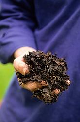 A handful of leaf mould
