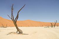 Deadvlei - a living desert in Namib Naukluft National Park, Namibia.