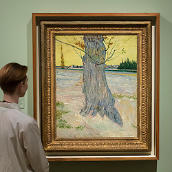 "© Licensed to London News Pictures. 25/03/2019. LONDON, UK. A staff member views ""Trunk of an Old Yew Tree"", 1888, by Vincent Van Gogh.  Preview of ""The EY: Van Gogh and Britain"" exhibition at Tate Britain, the first exhibition to look at the work of Vincent Van Gogh through his relationship with Britain and how he inspired British artists.  Over 50 of his works are on display 27 March to 11 August 2019.  Photo credit: Stephen Chung/LNP"