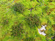 Vibrant green moss and plants grow in the Martial Mountains seen from the Canadon Negro trail, Tierra del Fuego National Park, a day hike from the ski lift above Ushuaia, Argentina, South America.