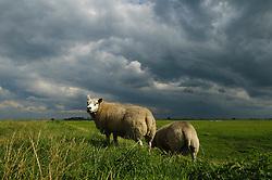 Eempolder, Nationaal Landschap Arkemheen Eemland. Utrecht, Soest, Baarn, Eemnes. De Eem