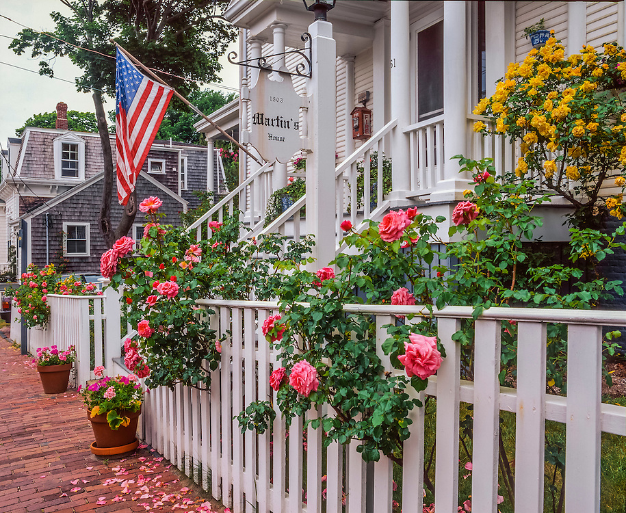 Roses & geraniums along white picket fence, 1803 Martin's House, Nantucket, MA
