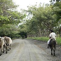 Central America, Latin America, Costa Rica. Road from Puerto Jiminez to Lapa Rios.