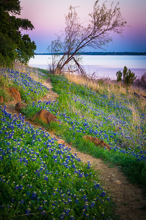 Bluebonnets at Grapevine Lake in North Texas