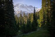 Rainier peaking through meadow and trees - Mount Rainier National Park, WA