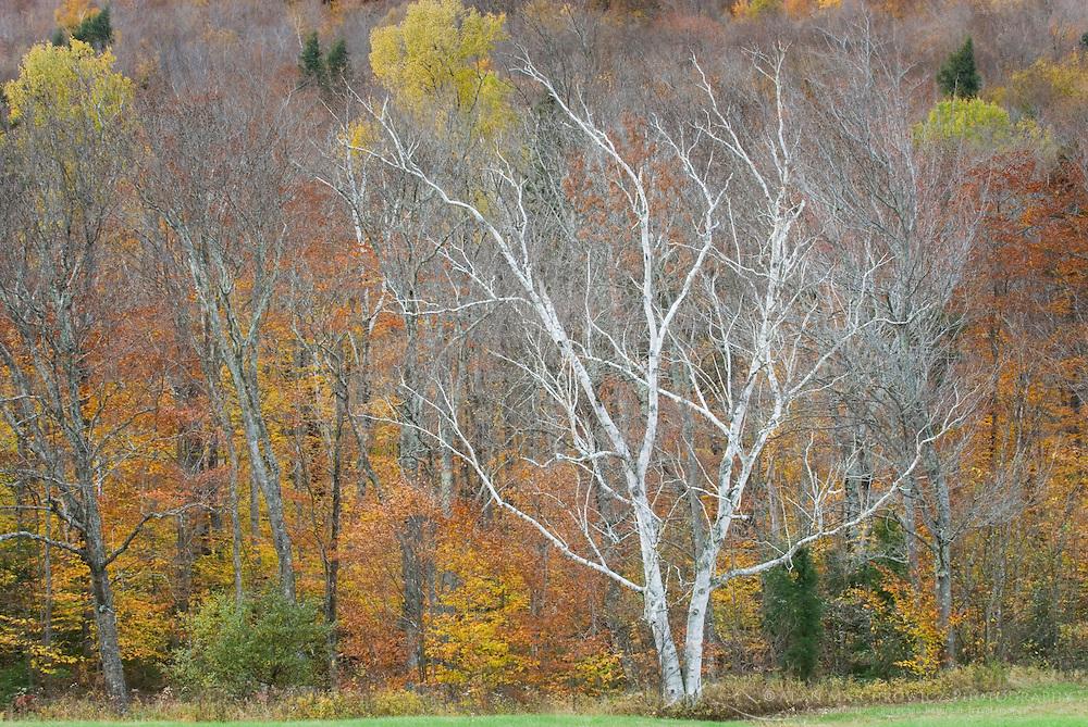 Fall foliage Grafton Notch Maine USA
