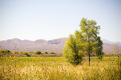 The Bosque del Apache National Wildlife Refuge in New Mexico