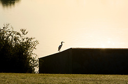 Bird sitting on a wall along the pond at sunset at Storey Park in Houston, Texas