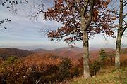 Hill landscape in Shenandoan Nationalpark. Virginia. United States of America.