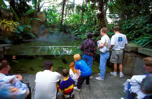 Crowd watching aquatic animals at the aquarium in Moody Gardens Galveston Texas