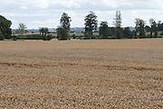 wheat, field, arable, crop, farming, harvest,