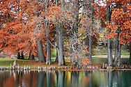 A Quiet Little Pond And Eastern Red Cedar Trees In Autumn Attire, Southwestern Ohio, Juniperus virginiana
