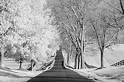Infrared (IR) photograph of a rural street in Central Kentucky in Fall.  The street was lined with bare trees on one side and trees with all of their leaves on the other.  The scene was photographed using a camera modified to be sensitive to the infrared spectrum of light.  Fine art photography by Michael Kloth. Black and white infrared photographs