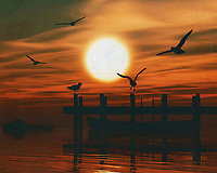 Seagulls playing at sunset on the beach. What could be more atmospheric and bring the sea into your home than this coastal scene. This painting easily brings the atmosphere of the sea to your home. This coastal scene can be printed in different sizes and on different materials. Both on canvas, wood, metal or framed so it certainly fits into your interior. –<br /> -<br /> BUY THIS PRINT AT<br /> <br /> FINE ART AMERICA / PIXELS<br /> ENGLISH<br /> https://janke.pixels.com/featured/gulls-at-sunset-4-jan-keteleer.html<br /> <br /> <br /> WADM / OH MY PRINTS<br /> DUTCH / FRENCH / GERMAN<br /> https://www.werkaandemuur.nl/nl/shopalbum/Zonsondergangen/1846/53978/0<br /> –<br /> -
