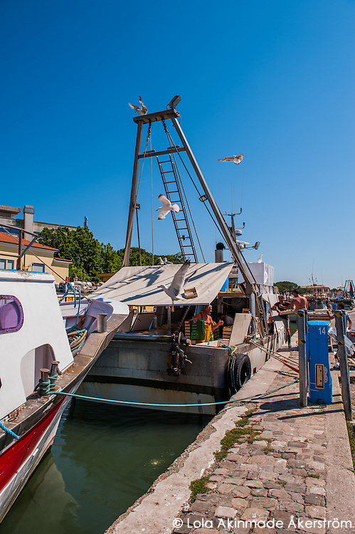 Fishermen and Fishmongers in Cesenatico