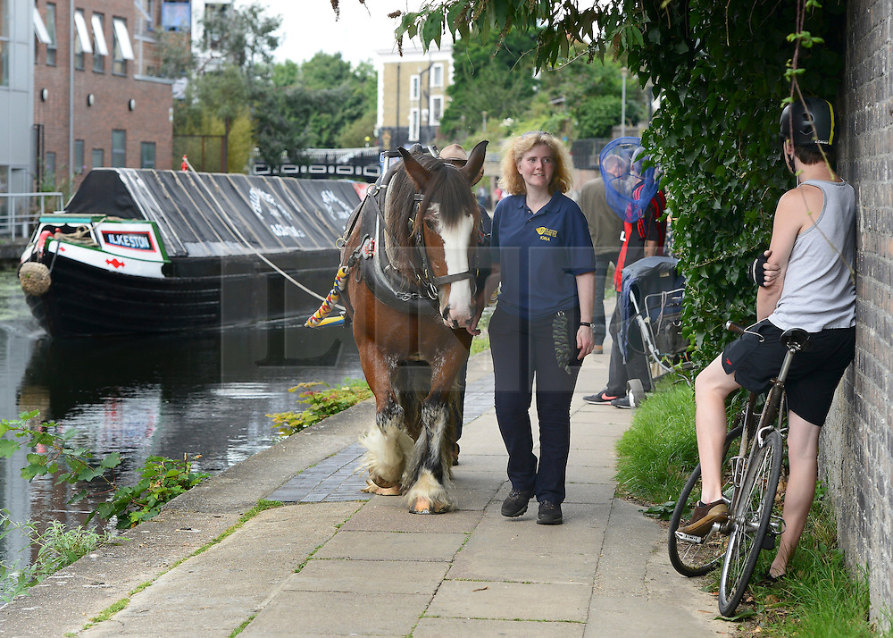 © Licensed to London News Pictures. 23/08/2012. London, UK. A cyclist waits for the horse and narrowboat to pass.  Ilkeston, a restored narrowboat, is towed by a horse, Buddy, a 13-year-old Clydesdale, across London's canal network, on its way to the London Canal Museum. It has journeyed from Ellesmere Port in Cheshire, through more than 100 locks, to London to celebrate its 100th birthday.. Photo credit : Stephen Simpson/LNP