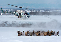 Idaho Fish and Game officials persue a herd of elk during a capture and collaring operation in mid-January. The effort was part of a study of the Targhee Elk Herd in eastern Idaho, the last to be documented in a decades-long study of elk herd migrations in the Greater Yellowstone Region.