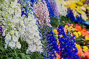The Chelsea Flower Show 2014. The Royal Hospital, Chelsea, London, UK. 19 May 2014.
