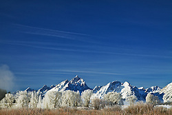 """Winter, frosty cottonwoods, Grand Teton National Park<br /> <br /> For production prints or stock photos click the Purchase Print/License Photo Button in upper Right; for Fine Art """"Custom Prints"""" contact Daryl - 208-709-3250 or dh@greater-yellowstone.com"""