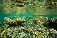 Coral reef crest in Cuba