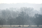 © Licensed to London News Pictures. 25/03/2015. Richmond, UK A cold morning in Richmond Park, Surrey, today 25th March 2015. Frosty patches appeared overnight. . Photo credit : Stephen Simpson/LNP