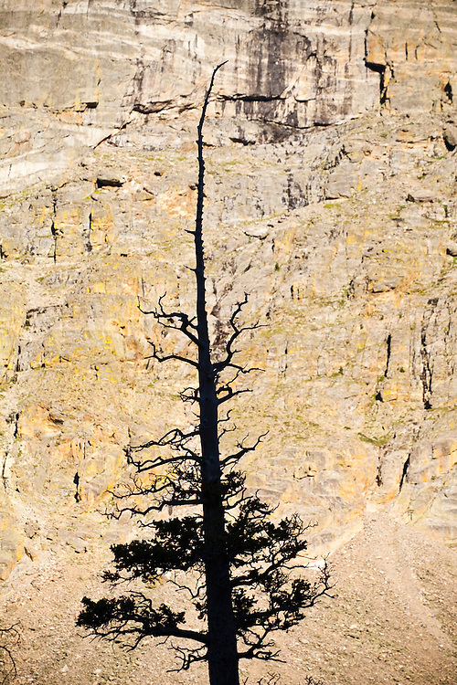A tree silhouetted against steep valley walls in Rocky Mountain National Park, Colorado.