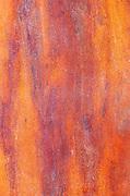Bark detail of arbutus (Madrone) tree (Arbutus menziesii)<br /><br />British Columbia<br />Canada