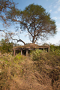 Hunting Lodge ruins by the entrance to Ranthambhore National Park, Rajasthan, Northern India