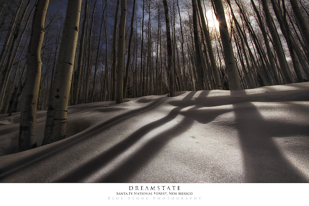20x30 poster print of aspens, snow and shadows.