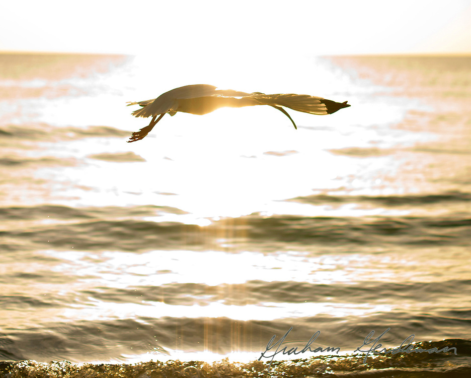 a white ibis crosses the setting sun, reminiscent of the Egyptian Ibis god, Thoth, with a sun disk.