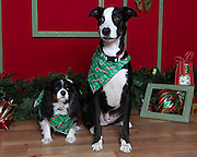 Christmas pet photos