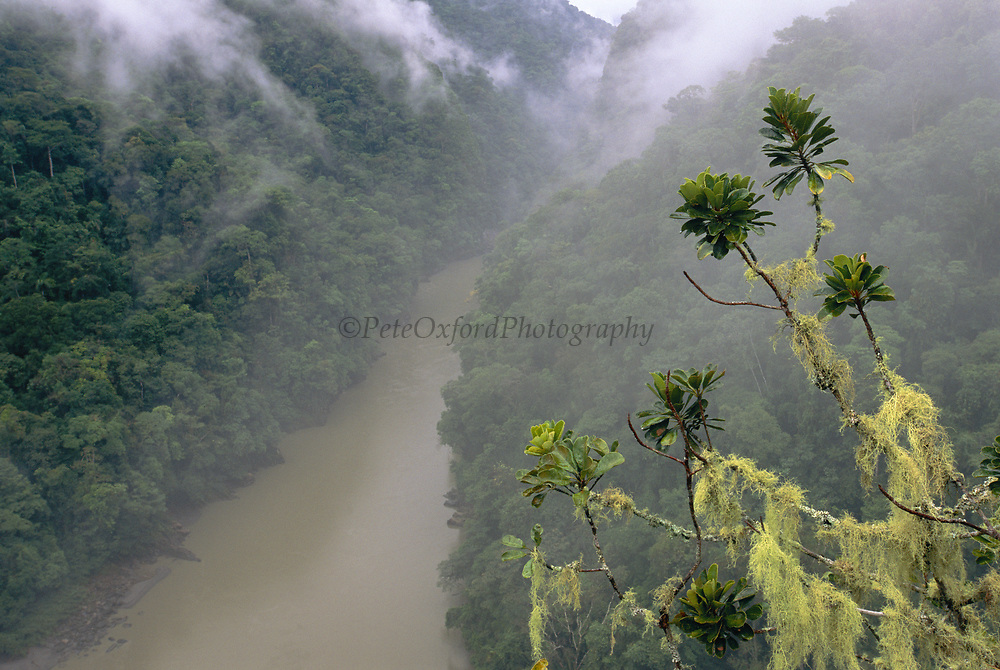 Pongo de Mainique Canyon<br />
