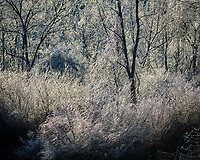 Ice storm aftermath. Image taken with a Fuji X-T2 camera and 100-400 mm OIS lens