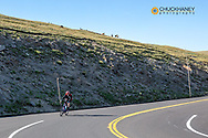 Road bicycling with heard of elk on ridge on Trail Ridge Road in Rocky Mountain National Park, Colorado, USA MR