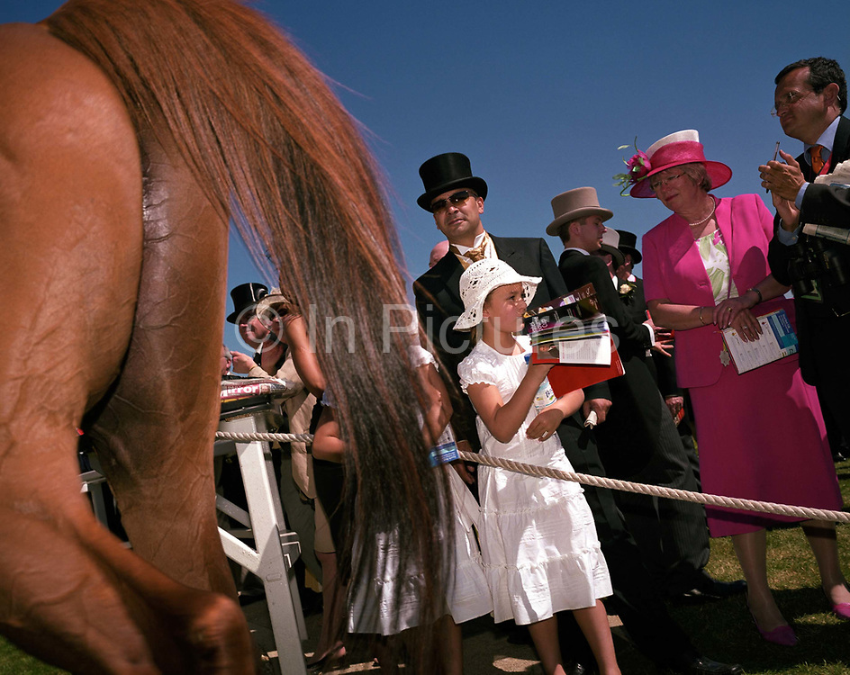 From a low angle, we see the crowds of racing upper classes in the members' enclosure, gathering to watch a winning horse pass-by at the Ascot races. Top-hatted gentlemen accompanied by ladies in pink and girls in white lace dresses mingle in the area reserved for the privileged at this famous race event. The back quarters of the winning horse with its veins and muscle shine through its paper-thin skin reveal an athletic animal bred for speed and endurance.