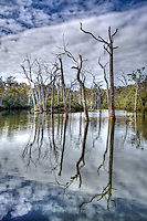 lake, trees, blue sky, clouds, dead trees, water, stems