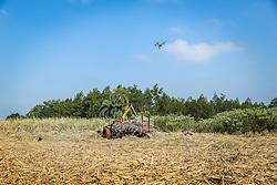 Drone Inspire 1 do fabricante DJI sobrevoa canavial orgânico, lavoura de cana-de-açucar na propriedade da cachaçaria premium Weber Haus, no bairro Picada 48 Alta, em Ivoti, RS. FOTO: Gustavo Roth / Agência Preview