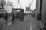 """16/01/1960<br /> 01/16/1960<br /> 16 January 1960<br /> Horses for slaughter being loaded for export to the Netherlands from Dublin. Horses being loaded onto the Dutch ship """"Theano""""."""