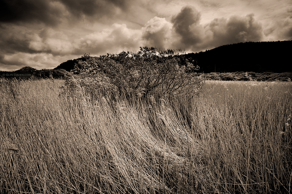 A small area of tall reeds in an expanse of marshland gets the full brunt of the wind, the direction highlighted by bent shaped stems in the foreground, whilst the clouds race over from West to East.